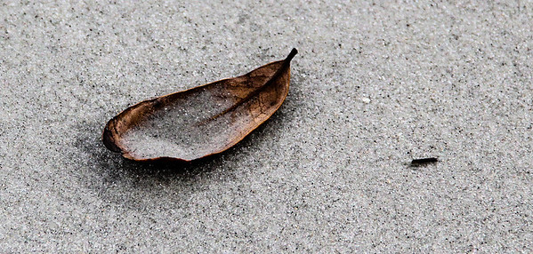 solitary leaf -1