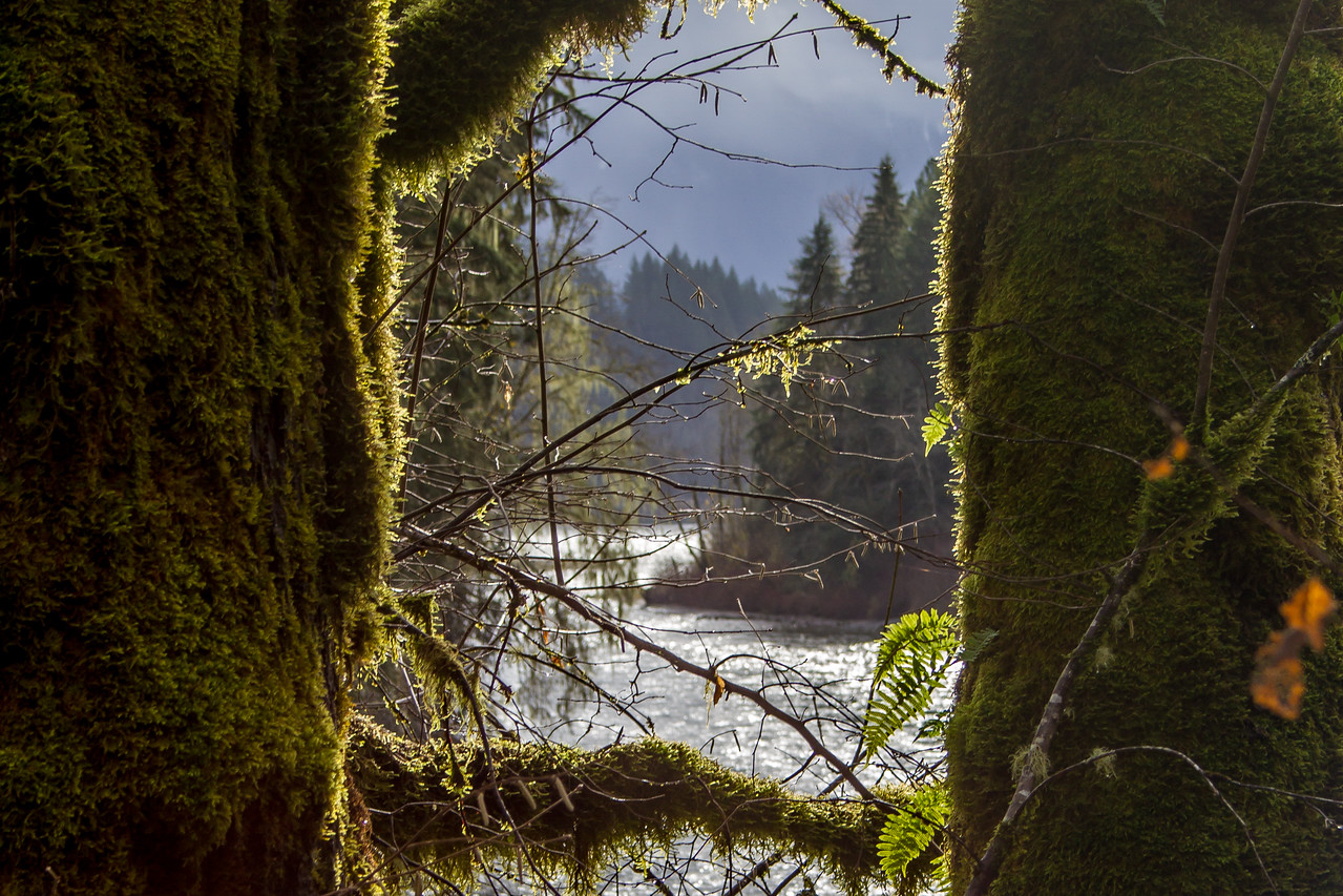Forest Passage