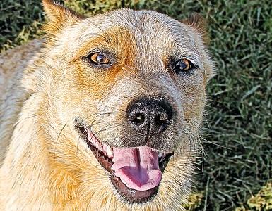 old dog-
