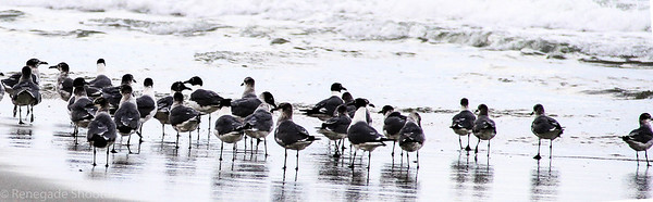 sea gulls on beach-2