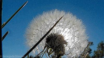 make a wish-1
