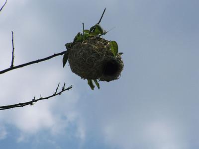 Weavers Nests (3)