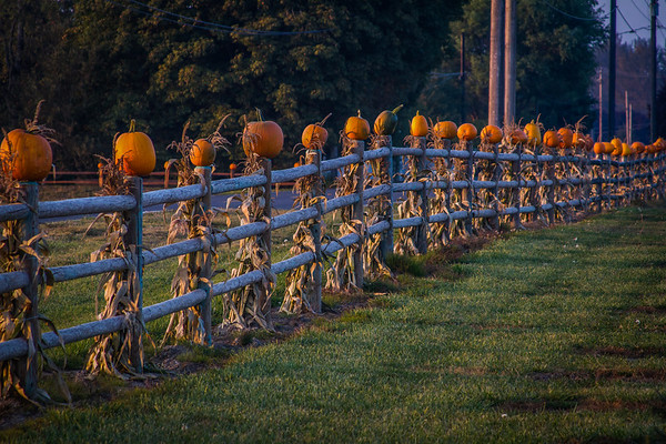 Stalking Pumpkins