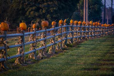 Pumpkin Fence #1