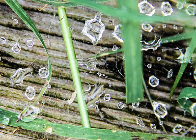 spider web water droplets-