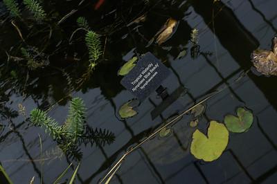 20120616 Matthaei Botanical Gardens