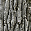 Old Tree skin