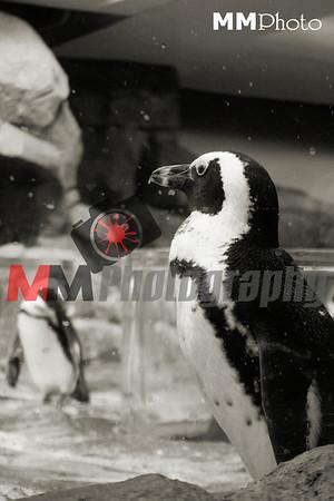 Zoo 2011