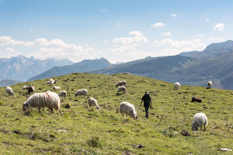 La descente à travers les troupeaux