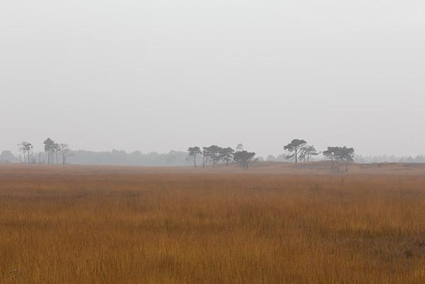La lande en automne