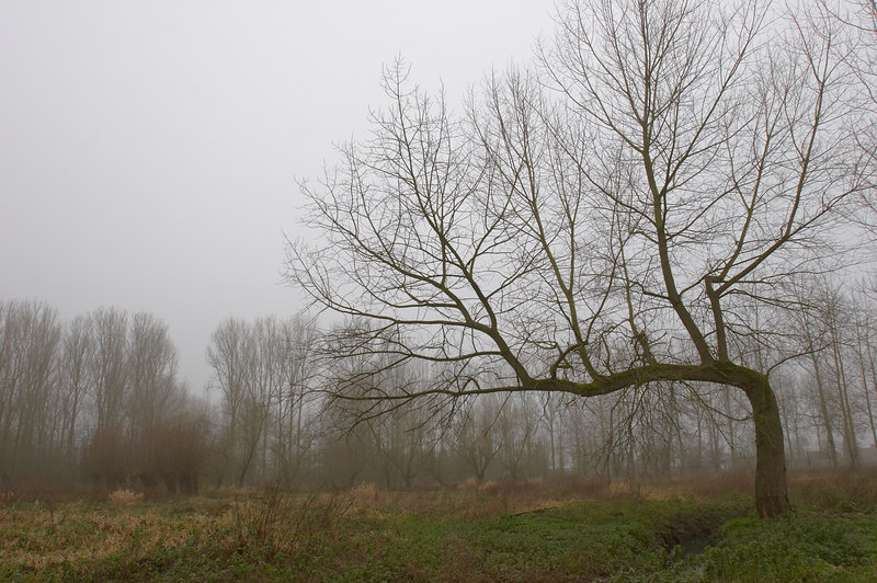 Wolvertem : Wolvertemse beemden (vallée du Molenbeek)