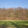 Bois du Hautmont