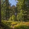 Dans le bois de Rixensart