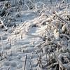 La terre a son manteau de neige
