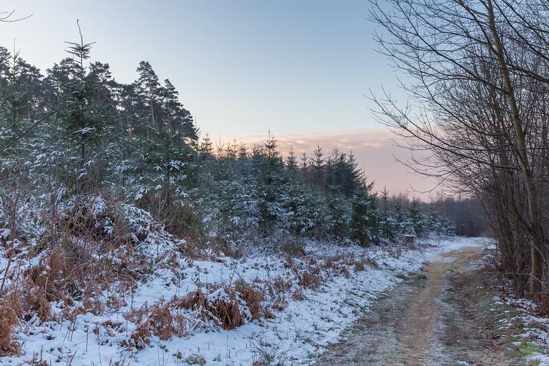 Un chemin dans le Bois Sainte-Catherine