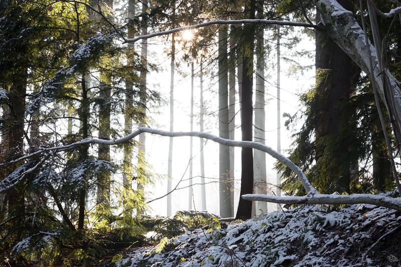 Le soleil illumine le bois