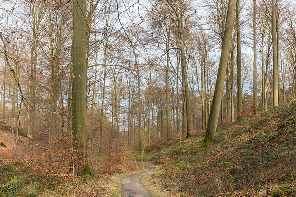 Le vallon du Vuylbeek en hiver
