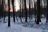 Le soleil se couche sur la forêt