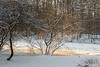 L'arbre ensoleillé<br /> <br /> dans le vallon du Kleine Flossendelle
