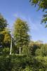 Bois de Baudour