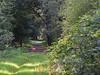 Chevreuil dans le bois