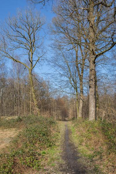 Forêt de Rance