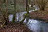 Forêt de Rance : ruisseau des Fonds