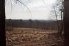 Brume sur le bois de Staneux