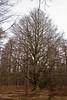 Le pointu hêtre dans le bois de Staneux