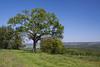 La vallée de l'Ourthe depuis Ouffet