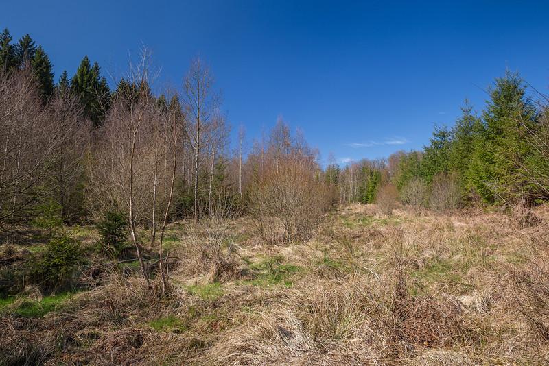 Le printemps dans la forêt entre Marbehan et Mellier