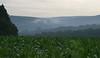 La forêt après l'orage