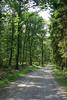Un chemin forestier près de Mormont