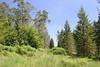 La forêt près d'Awenne