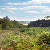 Clairière dans le Bois Mignotte