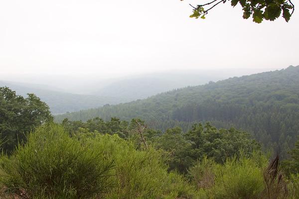 Une forêt sans animaux