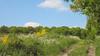 La campagne près de Mont-Gauthier au printemps
