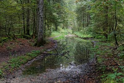31-08 Forêt de Tresberuy