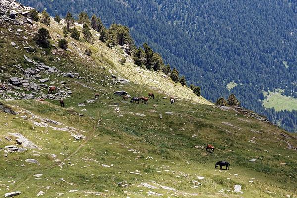 Vallée de Ransol - Chevaux au Tùro de Jan