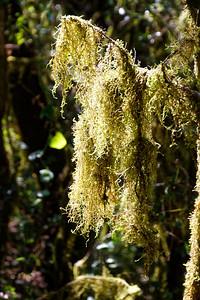 Lichens dans la descente sur Gournier
