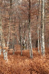 Forêt des Monges