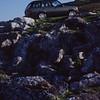 Range Rover 292