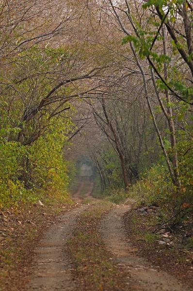 Jungles of Ranthambhore national park