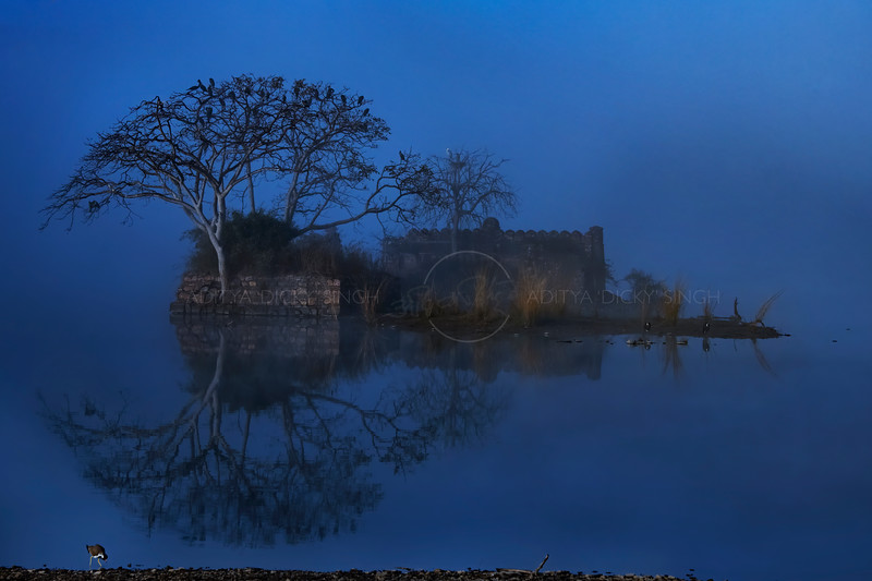 An ancient building a trees reflecting off the waters of a Blue Lake in winters in Ranthambhore national park, India