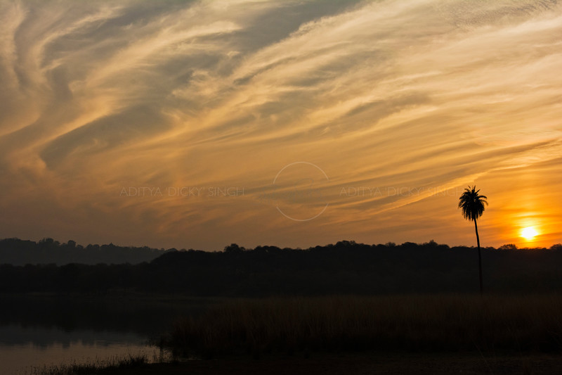 Sunset in Ranthambhore