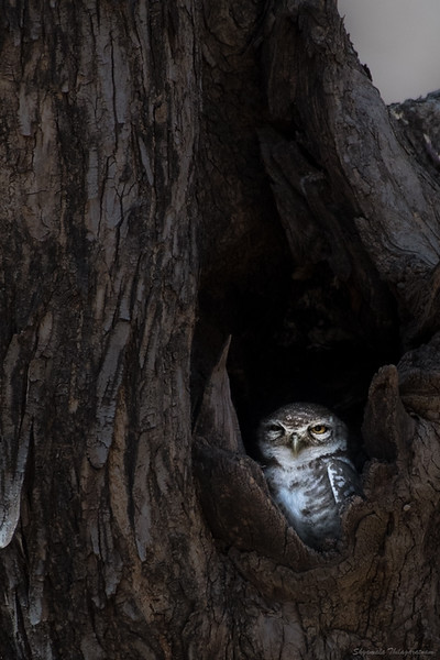 As we bounced along in our vehicle, our eagle-eyed guide spotted this little one in a tree,