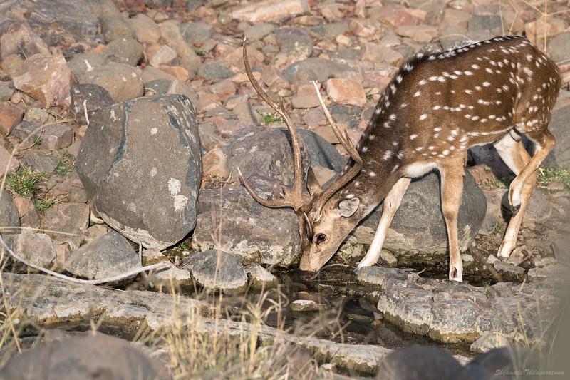 ...an unsuspecting deer approaches...