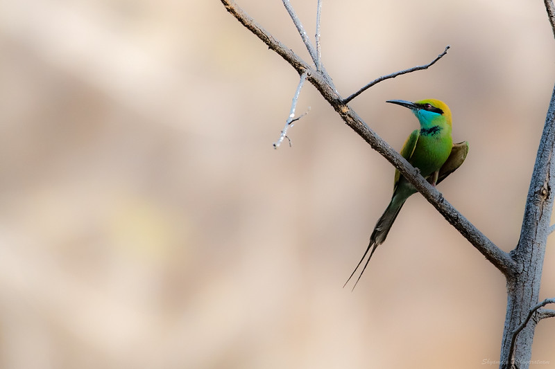 Dabbling in bird photography