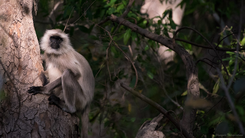 There we were, chatting in the shade, languidly photographing langurs...