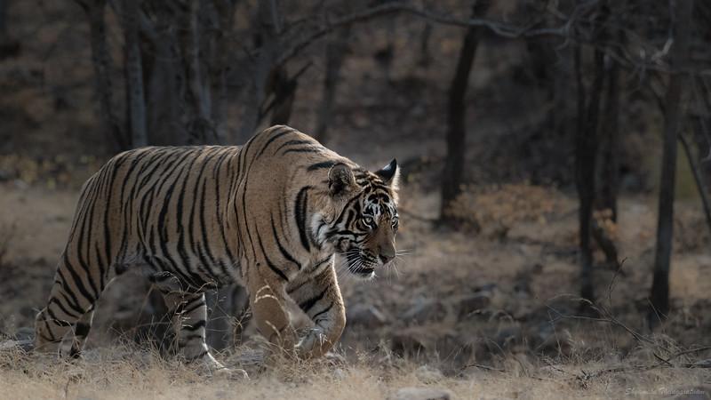 Veeru on the prowl